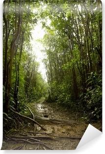 Poster Tropischer Regenwald Boden Pixers Wir Leben Um Zu Verandern