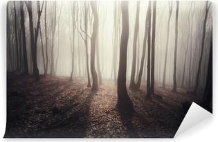 Vinyl-Fototapete Wald mit Sonnenstrahlen leuchtenden durch Bäume