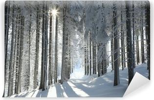 Vinyl-Fototapete Waldweg unter Pinien gefrostet