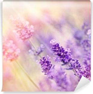 Vinyl-Fototapete Weicher Fokus auf schönen Lavendel - durch Sonnenstrahlen beleuchtet