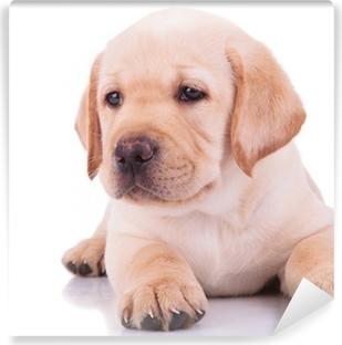 Vinyl-Fototapete Weißen Labrador Retriever Welpe Hund