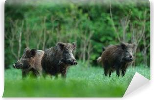 Vinyl-Fototapete Wildschweine mit Wald-Hintergrund