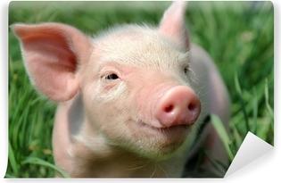 Vinyl-Fototapete Young pig auf einem grünen Rasen