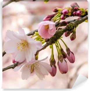 Vinyl-Fototapete Zartheit: Nahaufnahme Japanischer Kirschblüte :)