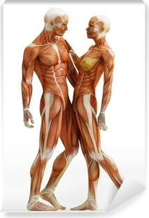 Fototapet av vinyl Anatomi par