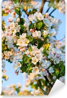 Fototapet av Vinyl Äppelträd blommar