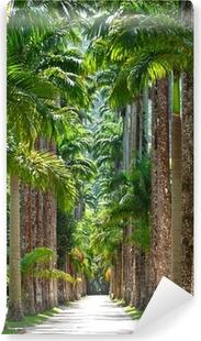 Fototapet av Vinyl Botaniska trädgården. Rio de Janeiro