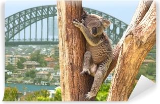 Cute Koala i Sydney, Australien Vinyl Fototapet