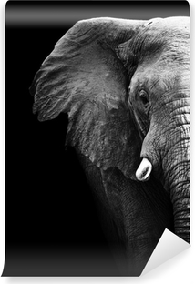 Elephant nærbillede Vinyl fototapet