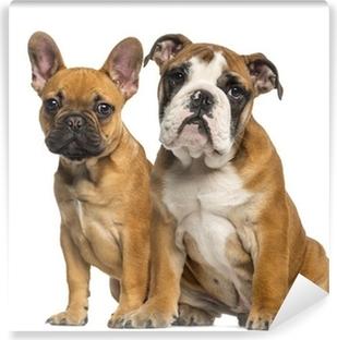 Fersk English Bulldog puppy and French Bulldog puppies, sitting Canvas XF-92