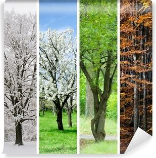 9012dbc3 Fire årstider collage: Vinter, forår, sommer, efterår Vinyl fototapet