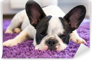 Fototapet av Vinyl Fransk bulldogg sova på mattan