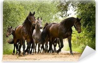 Fototapet av Vinyl Herd av hästar