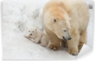 Hvid bjørn Vinyl fototapet