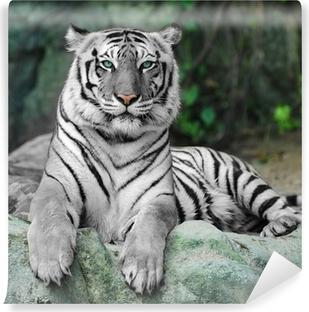 Hvid tiger på en sten i zoo Vinyl fototapet