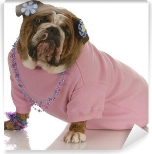 Fototapet av vinyl Kvinnelig engelsk bulldog med rosa klær og smykker 0621582686ff7