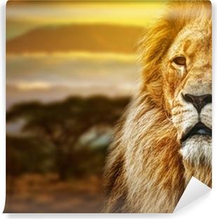 Fototapet av vinyl Lion portrett på savanna bakgrunn og Mount Kilimanjaro