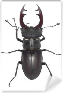 Mand stag beetle, Lucanus cervus isoleret på hvid baggrund Vinyl fototapet