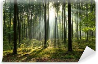 Morgen i skoven Vinyl fototapet