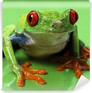 Fototapet av Vinyl Rödögd frog makro isolerade exotiska groda nyfiket djur brigg