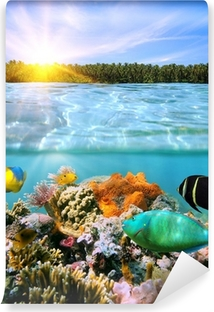 Solnedgang og farverigt undervands marine liv Vinyl fototapet