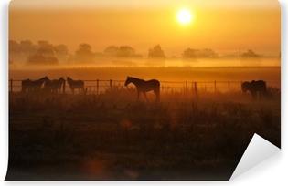 Fototapet av Vinyl Sonnenaufgang auf einer pferdeweide