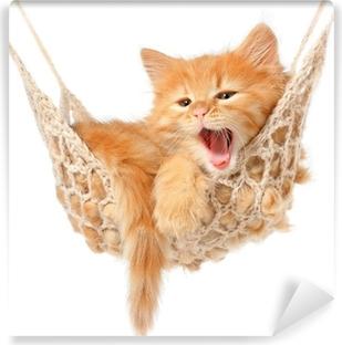 Fototapet av Vinyl Söt rödhårig kattunge i hängmatta