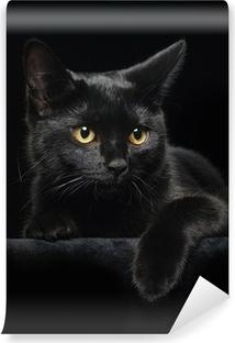 Fototapet av vinyl Svart katt med gule øyne