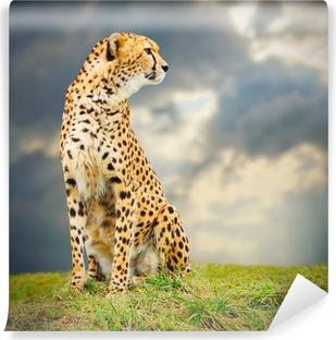 Fototapet av vinyl The Cheetah (Acinonyx jubatus) i afrikanske savanna.