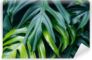 Fototapet av vinyl Tropiske grønne blader på mørk bakgrunn, natur sommer skog plante konsept