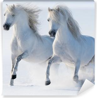 Fototapet av Vinyl Två galopperande snövita hästar