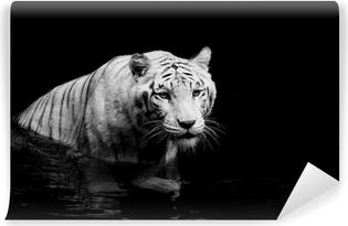 Fototapet av Vinyl Vit tiger