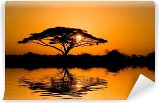Fototapeta winylowa Akacja drzewo o wschodzie słońca