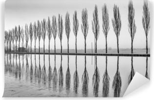 Vinylová fototapeta Alberi Riflessi sul Lago all'alba v bianco e nero