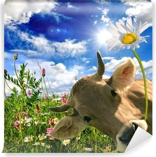 Vinylová Fototapeta Alles Liebe zum Geburtstag: Kuh schenkt eine Blume :)