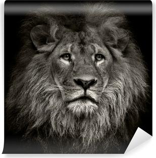 Vinylová Fototapeta Arogantní lev