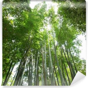 Fototapeta winylowa Bambusowy las