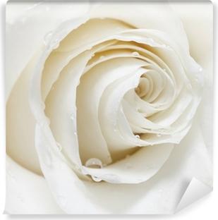 Fototapeta winylowa Biała róża