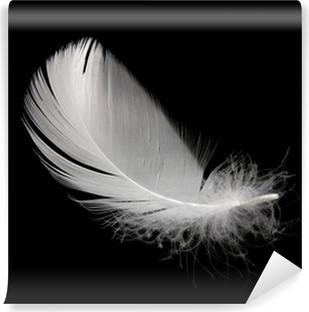 Vinylová Fototapeta Bílá labuť peří na černém pozadí