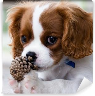 Fototapeta winylowa Cavalier King Charles Spaniel puppy