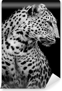 Vinylová Fototapeta Černá a bílá strana Leopard