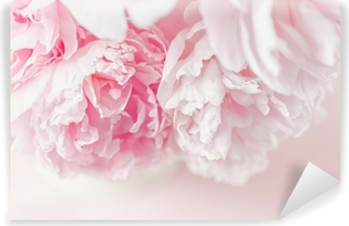 Vinylová Fototapeta Čerstvý řez kytici růžových pivoněk v přirozeném světle. Převzaty z výše uvedeného, růžové pozadí.