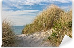 Vinylová Fototapeta Cesta na pláž přes duny a pláže trávy na Baltském moři