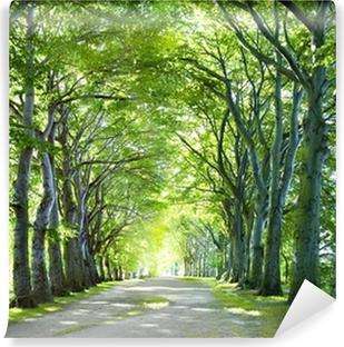 Vinylová Fototapeta Cesta v lese