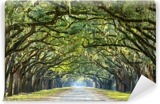 Vinylová Fototapeta Country Road lemované Oaks v Savannah ve státě Georgia