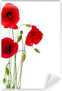 Fototapeta winylowa Czerwony kwiat maku na białym tle