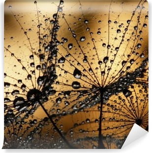 Fototapeta winylowa Dmuchawce z kroplami rosy