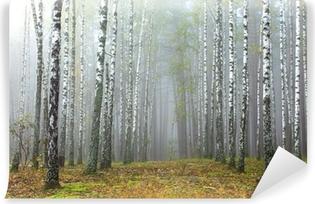 Fototapeta winylowa Gaj brzozy i suchej trawy na początku jesieni