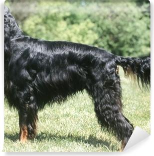 Obraz na plátně Gordon setr profil krásná lesklé černé vlasy ... 08bdbc20e6