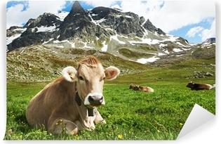 Vinylová Fototapeta Hnědá kráva na zelené trávě pastviny